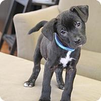 Adopt A Pet :: Penny Lane - Marietta, GA