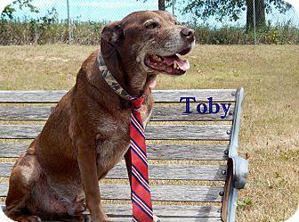 Labrador Retriever Mix Dog for adoption in Bucyrus, Ohio - Toby