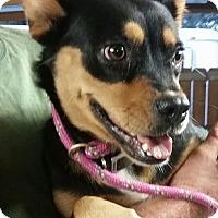 Adopt A Pet :: Snowflake - Gainesville, FL
