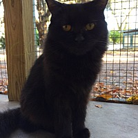 Adopt A Pet :: Sadie - Odessa, FL