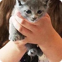 Adopt A Pet :: Frida Fox - Putnam, CT