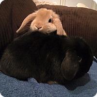 Adopt A Pet :: Littlefoot and Gizzy - Williston, FL
