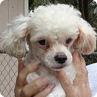 Adopt A Pet :: Mally - Crump, TN