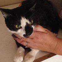 Adopt A Pet :: Jenna (FELV +) - Mesa, AZ