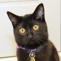 Adopt A Pet :: Cling - Lansing, MI