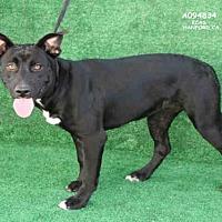 Adopt A Pet :: A094834 - Hanford, CA