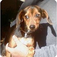 Adopt A Pet :: Maggie Mae - Duluth, GA