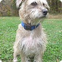 Adopt A Pet :: Candi - Mocksville, NC