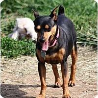 Adopt A Pet :: Betsy - Topeka, KS