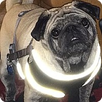 Adopt A Pet :: Mack - Huntingdon Valley, PA