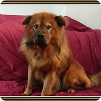 Adopt A Pet :: Petro - Holland, MI