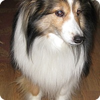 Adopt A Pet :: Cody - Charlottesville, VA