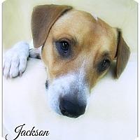 Adopt A Pet :: Jackson - Pascagoula, MS