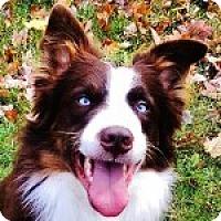 Adopt A Pet :: Mac - Medford, MA