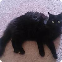 Adopt A Pet :: Ares - Sacramento, CA
