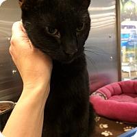 Adopt A Pet :: K.C. - Byron Center, MI