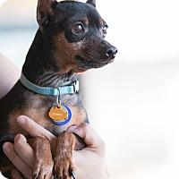 Adopt A Pet :: Sparky - Syracuse, NY