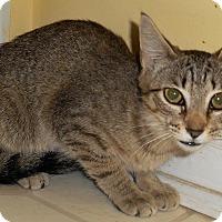 Adopt A Pet :: Susanna - Chattanooga, TN