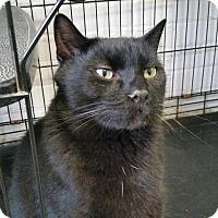Adopt A Pet :: Cole - Bloomingdale, NJ