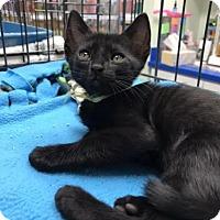 Adopt A Pet :: Dean - Orlando, FL