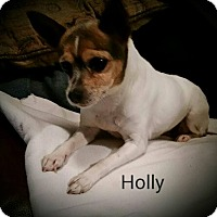 Adopt A Pet :: Holly - Hamilton, ON