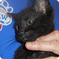 Adopt A Pet :: Spot - Parkton, NC