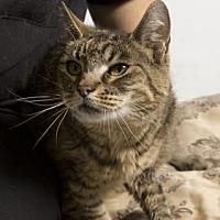 Adopt A Pet :: Pepper - Santa Paula, CA