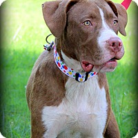Adopt A Pet :: Clyde - Glastonbury, CT