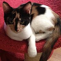Adopt A Pet :: CHRISSY - Putnam Hall, FL
