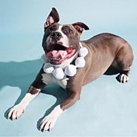 Adopt A Pet :: Jazz - Blacklick, OH