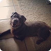 Adopt A Pet :: Simon - Courtesy Post - Cincinnati, OH