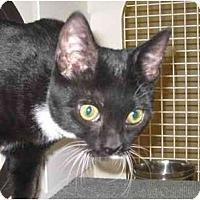 Adopt A Pet :: Felicity - Jenkintown, PA