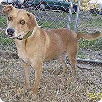 Adopt A Pet :: Kona - Leesburg, VA