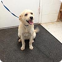 Adopt A Pet :: Maizy - Lancaster, VA