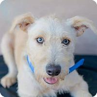 Adopt A Pet :: RICHARD (Adoption pending) - Irvine, CA