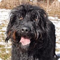 Adopt A Pet :: Chappie - Cincinnati, OH
