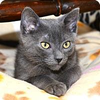 Adopt A Pet :: Petrie - Davis, CA