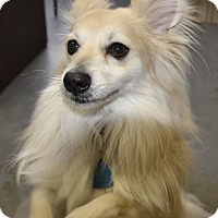 Adopt A Pet :: Copper - Meridian, ID
