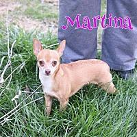 Adopt A Pet :: Martina D3057 - Shakopee, MN