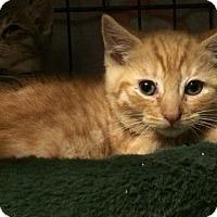 Adopt A Pet :: Comet - East Brunswick, NJ