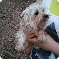 Adopt A Pet :: Scrappy - Crump, TN
