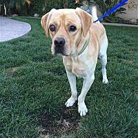 Adopt A Pet :: Markie - San Diego, CA