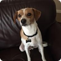 Adopt A Pet :: Otto in San Antonio - Austin, TX