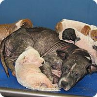 Adopt A Pet :: Bonnie & 4 Puppies - Henderson, NC