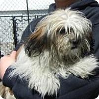 Adopt A Pet :: Prince - Antioch, IL
