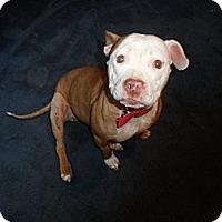 Adopt A Pet :: Hope - Whittier, CA