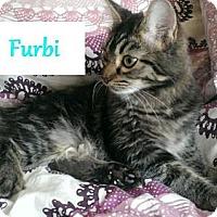 Adopt A Pet :: Furbi - Chandler, AZ