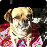 Adopt A Pet :: Roscoe - Poway, CA