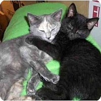 Adopt A Pet :: Twinkle - Richmond, VA