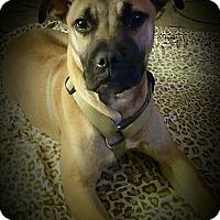Adopt A Pet :: Fargo ~ Adoption Pending - Youngstown, OH